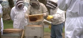 Beginners inspecting a hive